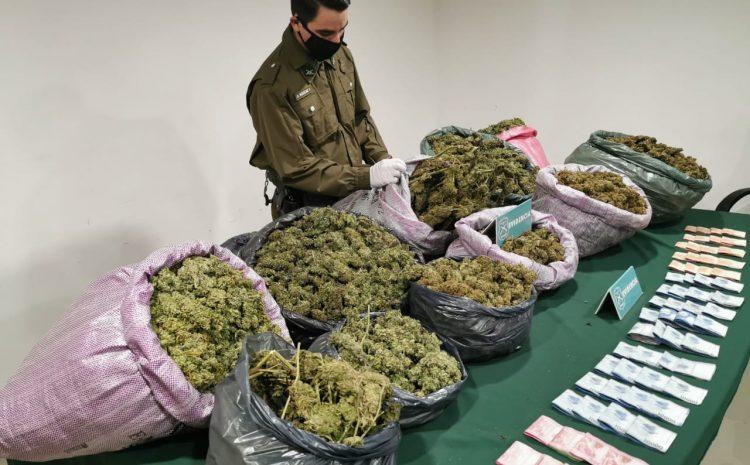 Dos personas detenidos por Cultivo y Trafico de Drogas en Canela