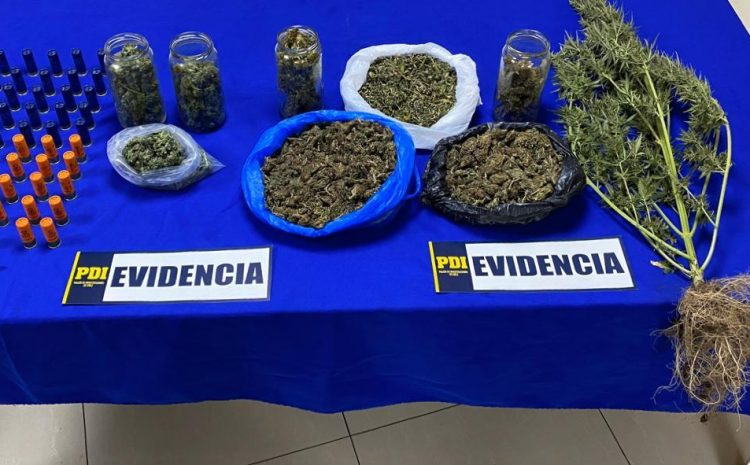 PDI de La Ligua detuvo a dos personas por venta de Cannabis Sativa en redes sociales.