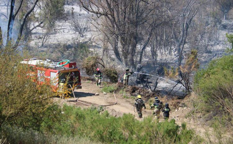 Carabineros efectuará denuncia de oficio ante incendio forestal ocurrido en Coirón