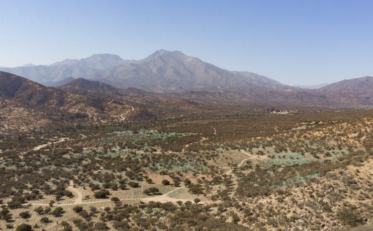 207 hectáreas de vegetación nativa fueron plantadas por Minera Los Pelambres en el Choapa