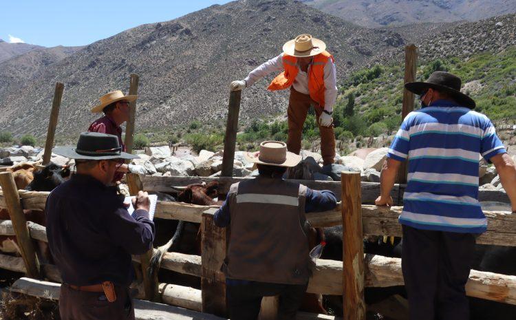 Ganaderos y Los Pelambres inician trabajo conjunto como preparación a las veranadas 2020-21