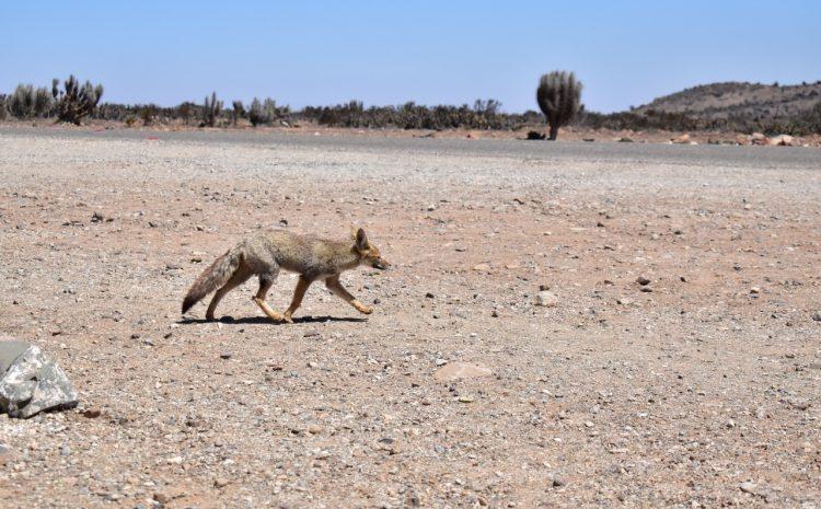 SAG y Seremi de Medio Ambiente se unen para hacer un llamado a no alimentar animales silvestres