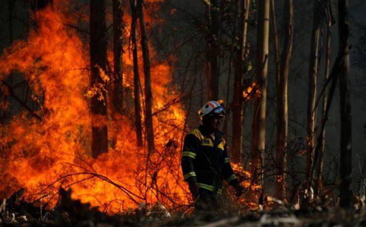 Se declara Alerta Roja para la comuna de Monte Patria por incendio forestal