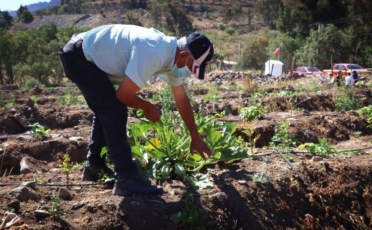 Programa piloto desarrollado por Minera Los Pelambres, el municipio y la Junta de Vigilancia impulsa la agricultura familiar en Illapel