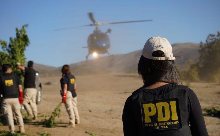 Operación Manto Verde: PDI desbarata organización criminal por tráfico de cannabis entre Punitaqui y La Florida