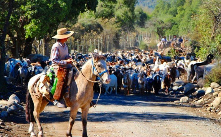 Indap entregará bono de 380 mil pesos para ayudar a crianceros de la región de Coquimbo ante suspensión de veranadas