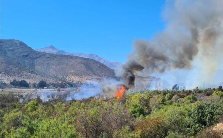Se reactiva incendio forestal en Salamanca